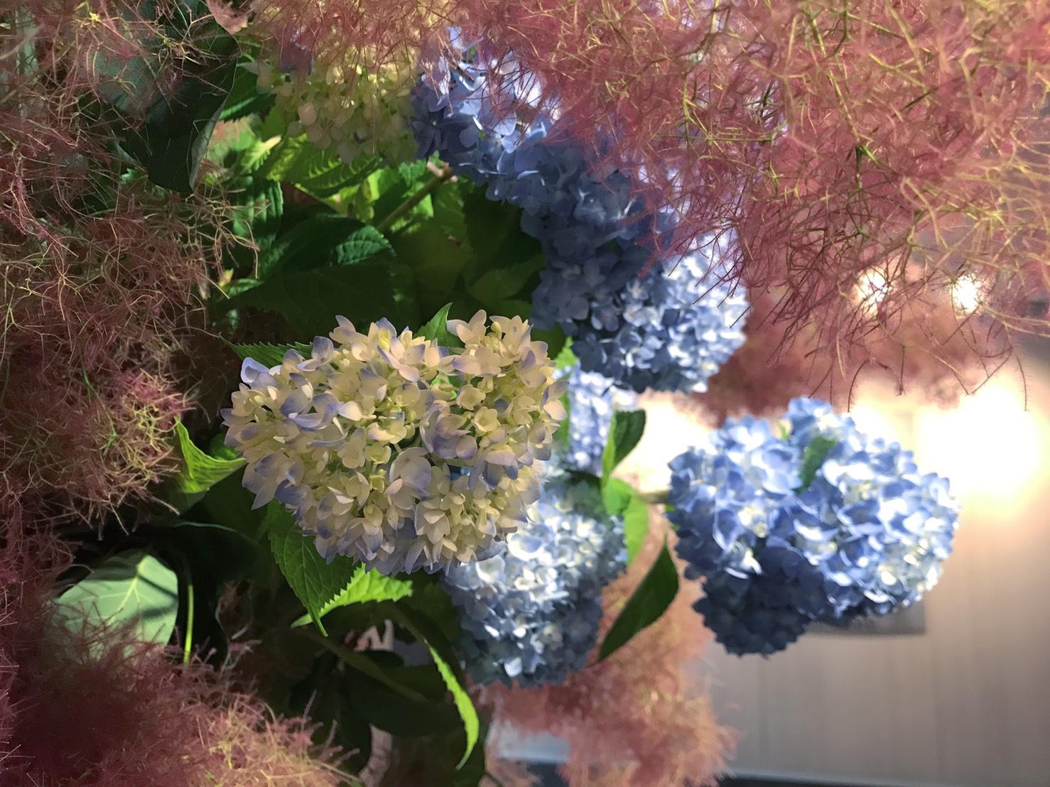 【レッスン情報】紫陽花とスモークツリーのリースレッスンのお知らせ